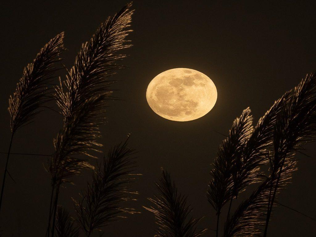 Online Monthly Full Moon Meditation & Manifestation ...